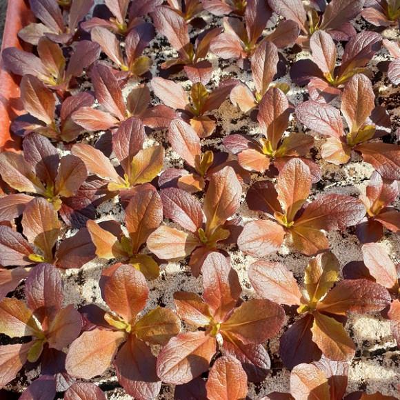 Multi-feuilles